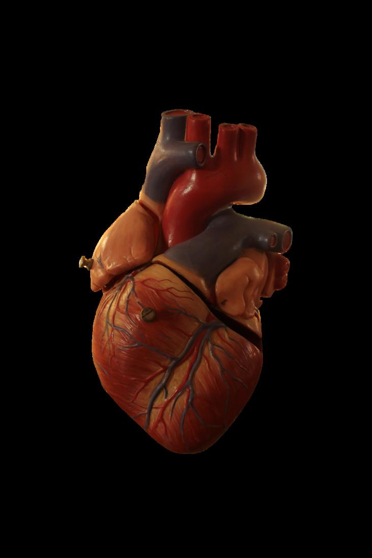 Сердце человека в картинках, открытки маме рождением