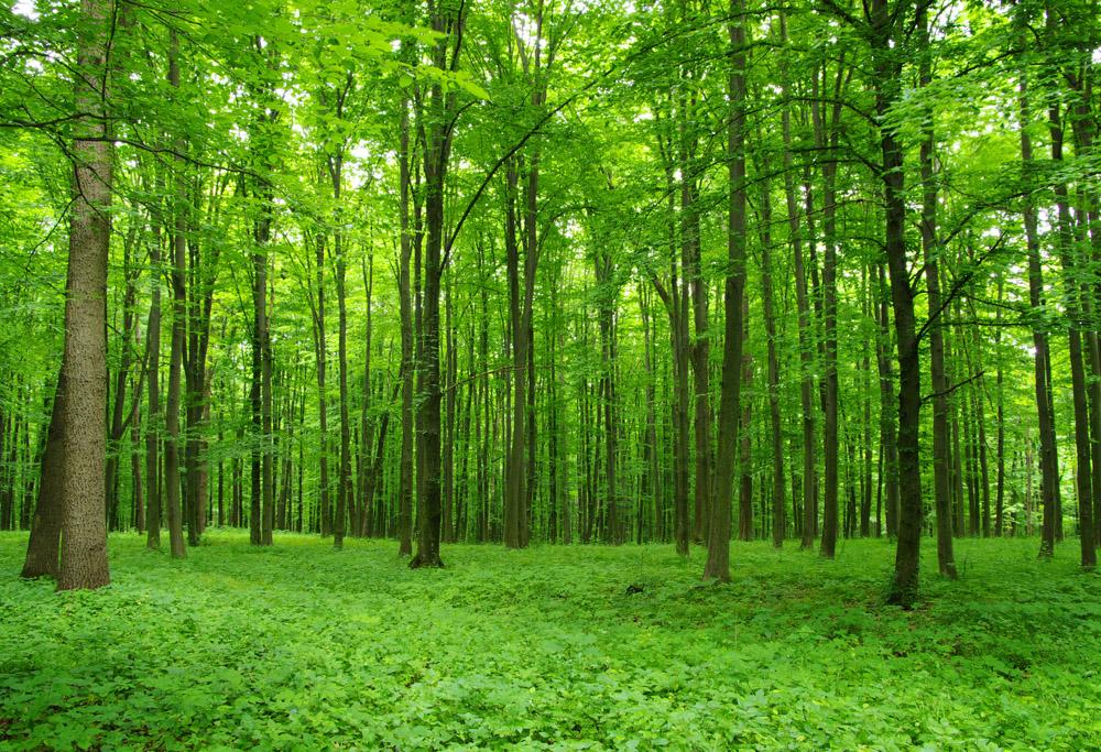 фотографии леса россии города располагается