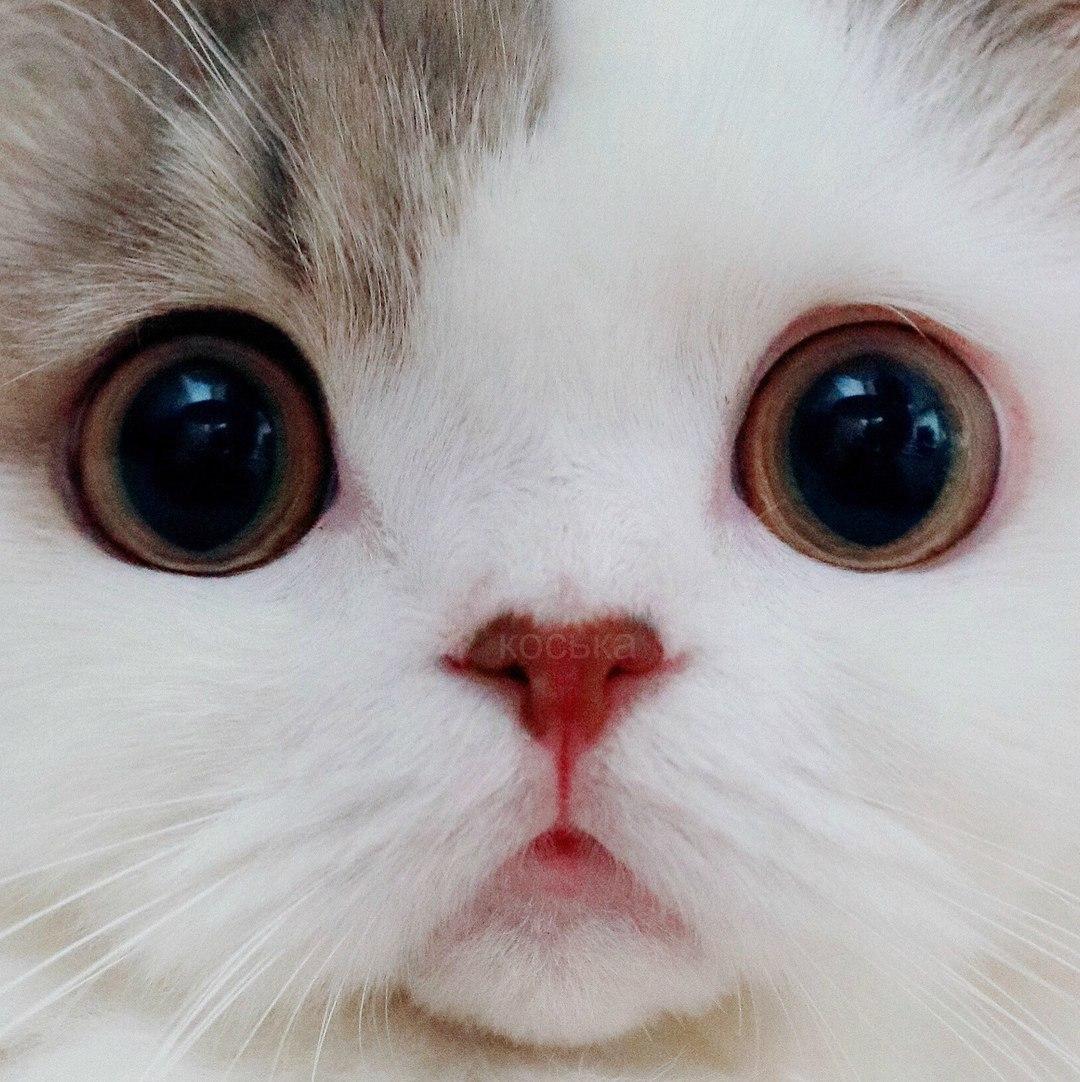 самые милые глаза картинки снимаете рук, следует