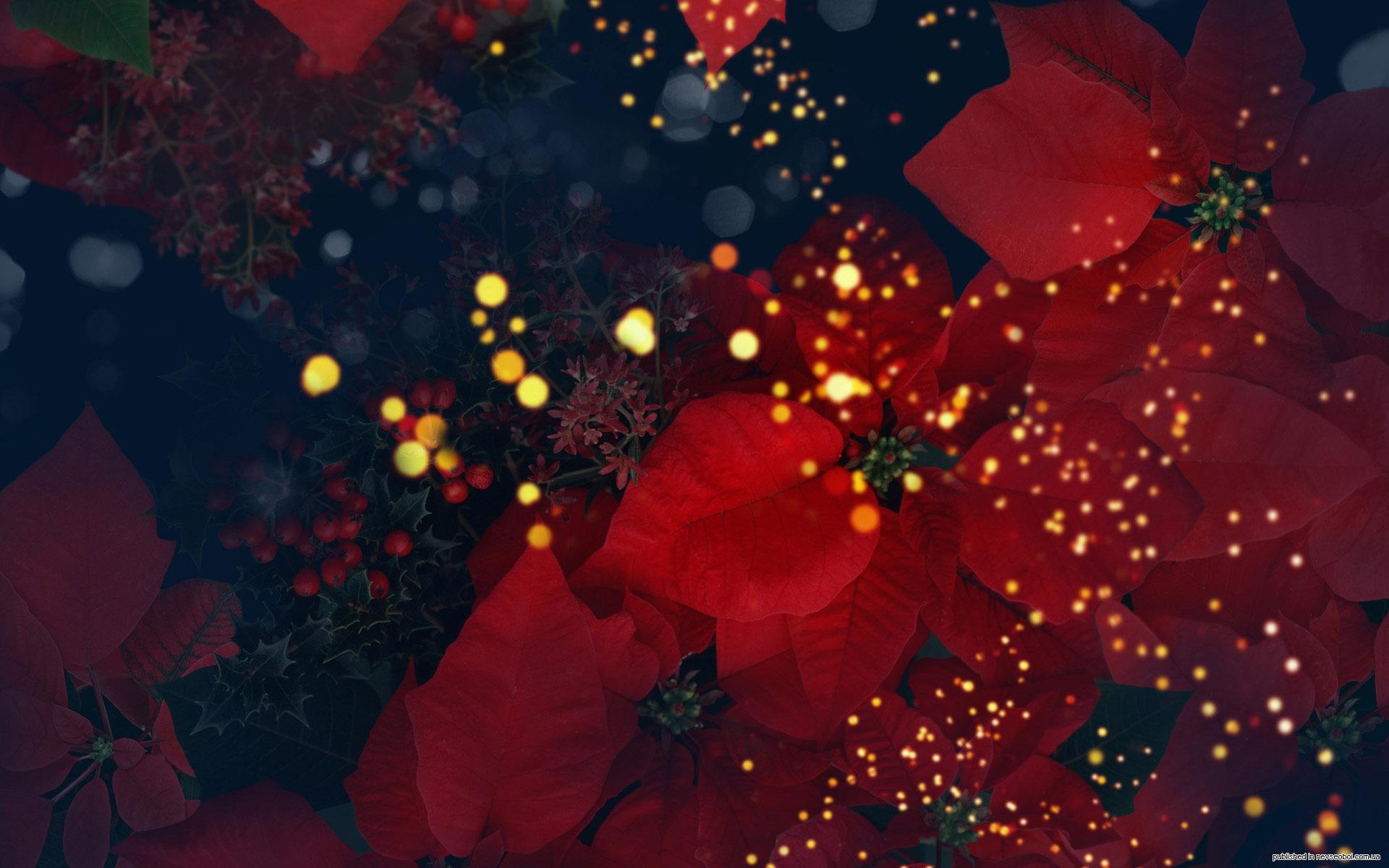 Картинки с красным цветом обои