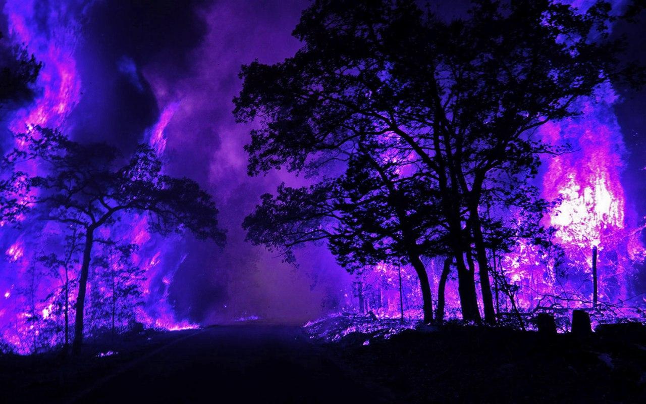 они фиолетовые картинки топ это