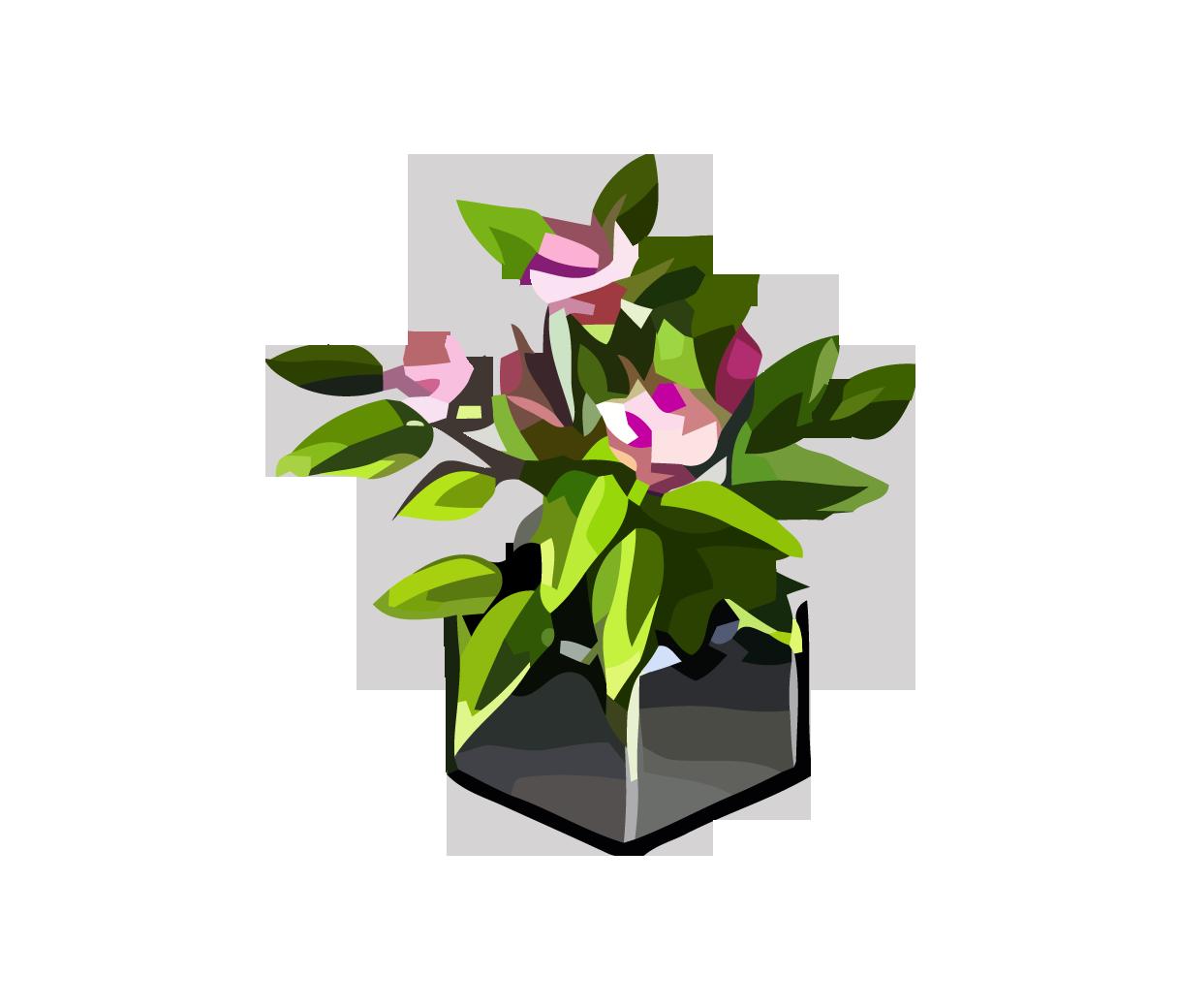 картинки цветы для аватарии ограничены забайкалье