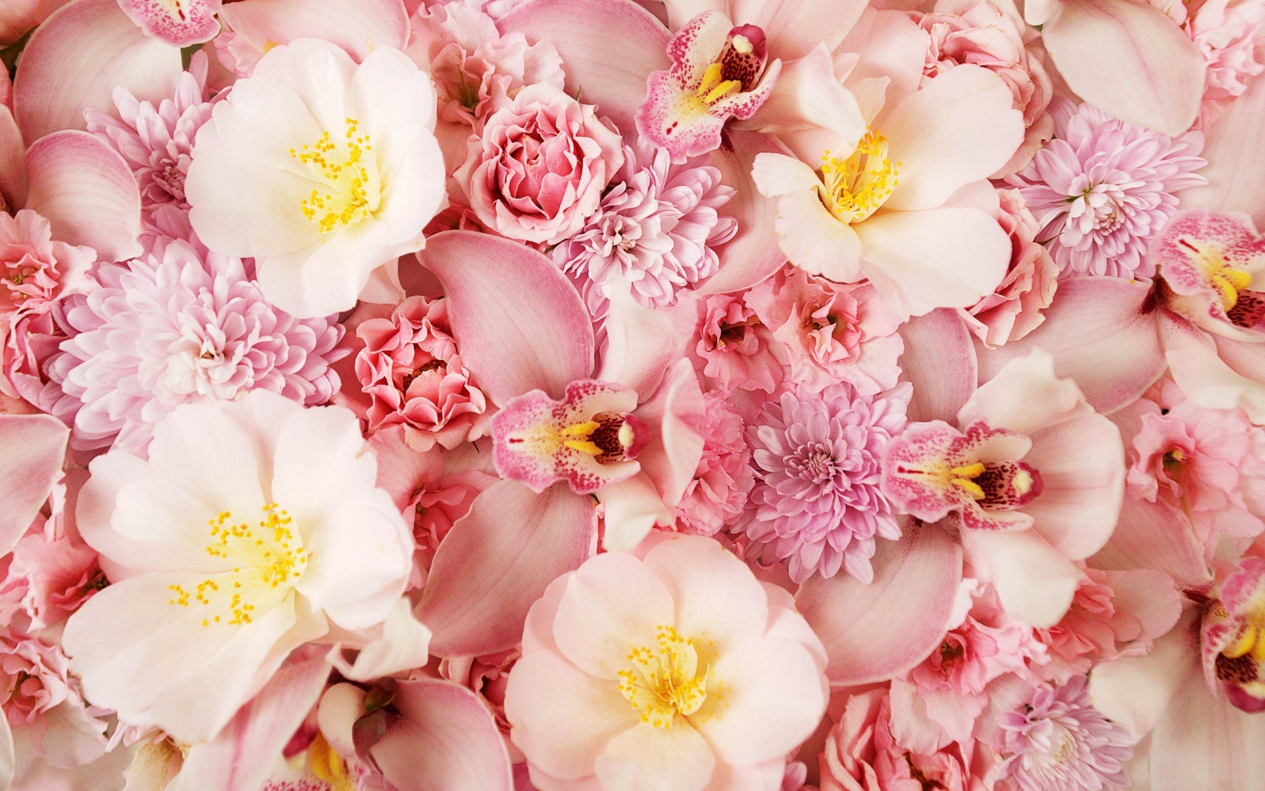 красивые постеры с цветами цветы