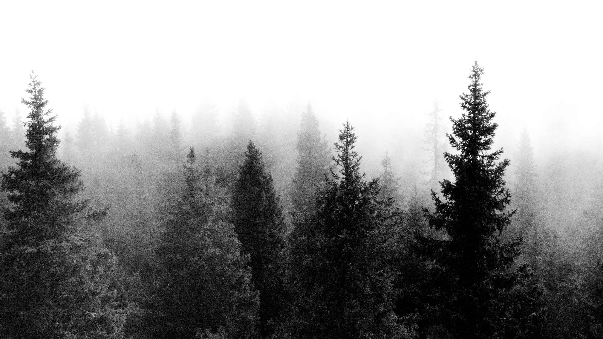 Картинка белый лес на черном фоне