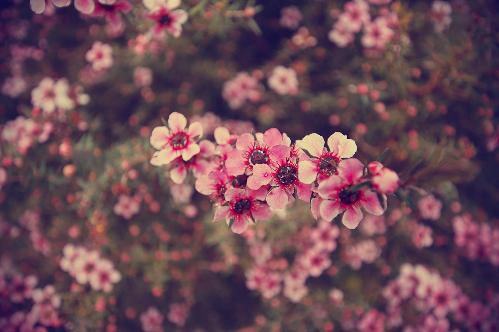 Картинки цветов на фон аска