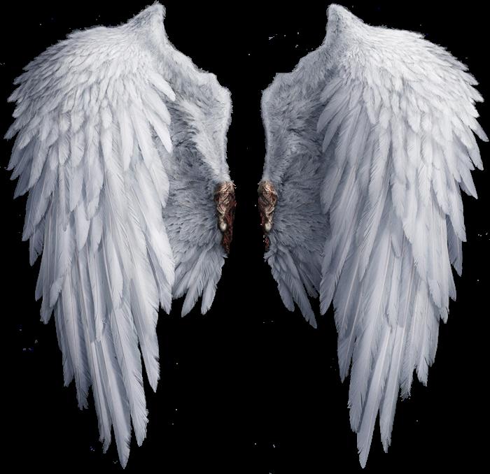 сделать реактивный что за фоторедактор крылья кладбище