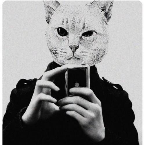 Картинки необычного кота технологию монтажа